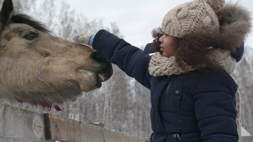 A Girl Touching The Nose Of The Domesticated Horses