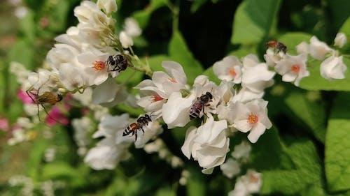 Bijen Die Zich Voeden Met De Nectar Van Volle Bloei Bloemen