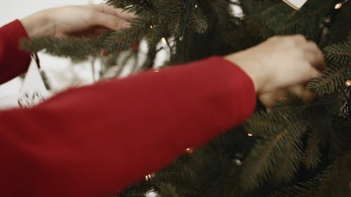 A Girl Arranging The Christmas Tree