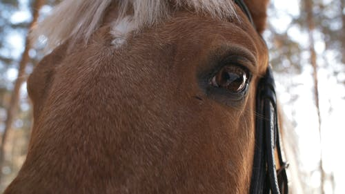 Close-Up View Of An Eye Of A Horse With Reflection