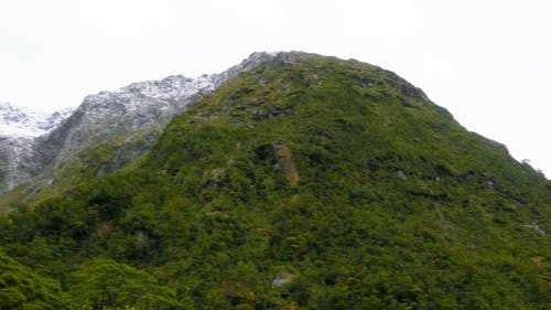 Wild Plants And Trees Growing On The Mountain Slopes