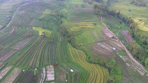 Aerial Footage Of A Field Of Rice Terraces