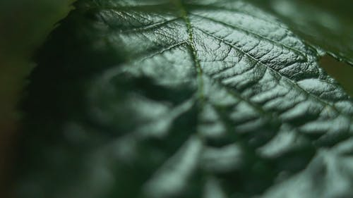 Close-Up Footage Of A Leaf