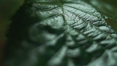 Imagens De Close Up De Uma Folha