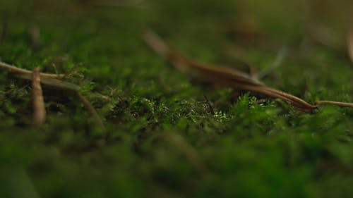 Moss Growing In The Forest Ground