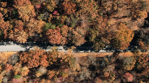 Traveling a Road That Cuts Through A Forest