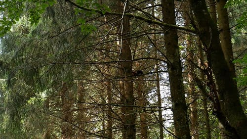 Tracking Footage Of A Squirrel Climbing Up A Tree