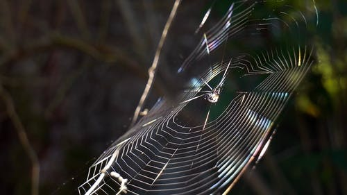 A Spider Resting On The Center Of Its Cobweb Waiting To Catch A Frey