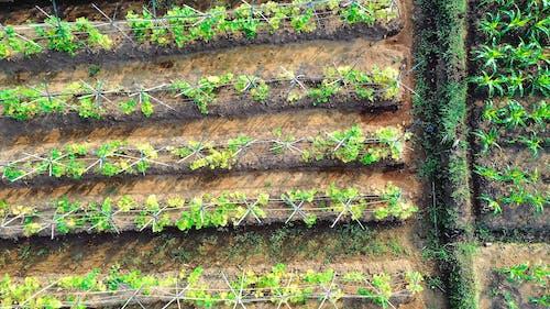 Кадры с дрона сельскохозяйственных полей на сельскохозяйственных угодьях