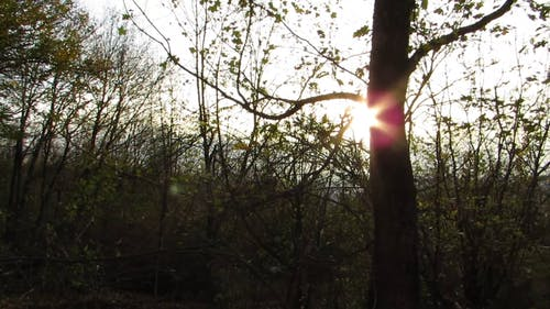 A Tree Trunk Covering The Ray Of The Sun