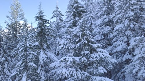 Video Of Snowy Trees