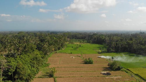 4K Flying Drone Video of Rice Field on Bali Island