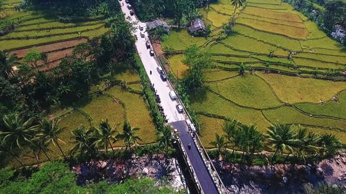 A Road Built Cutting Through Rice Fields