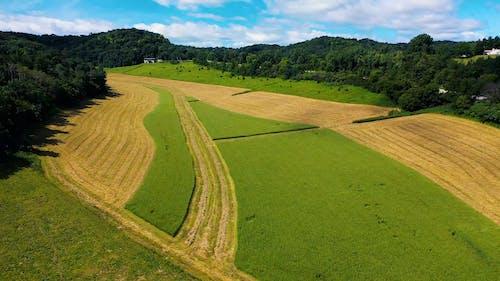 Farm Trucks Trail In A Wheat Field