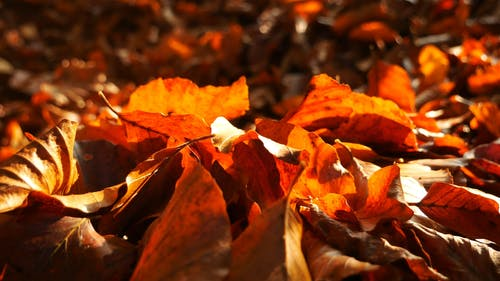 Fallen Leaves Of Trees During Autumn
