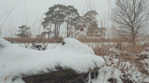 A Frozen River In Winter