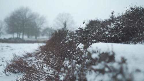 Snow Fall Covering The Surfaces Of The Ground
