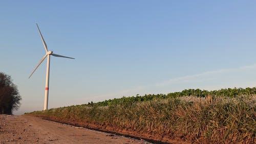 Grassfield Near Windmill