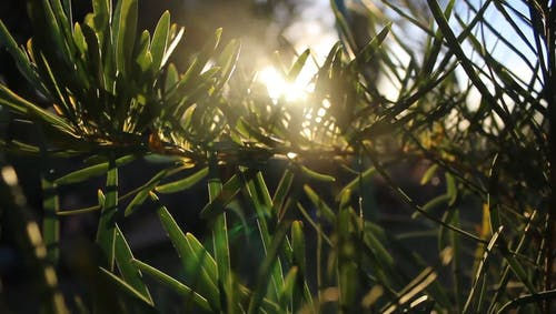 Sunlight Passing Through The Gaps Of The Plant Leaves