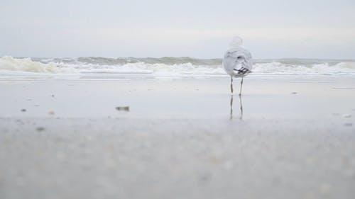 Waterbird On The Seashore