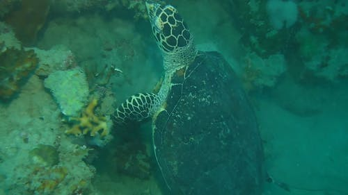 Tracking A Turtle Swimming Under The Sea Floor