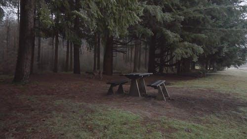 森の公園を自由に歩き回る犬