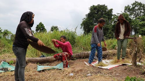 People Working In The Field
