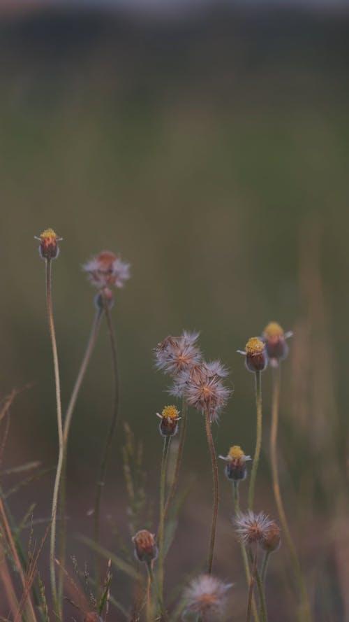 Flowers Of Wild Grass In Bloom