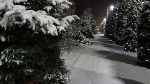 Christmas Trees And Lights In Winter