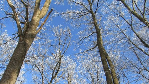 Beautiful Trees Under A Blue Sky