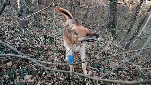 A Dog Biting  A Bark Of Leafless Tree