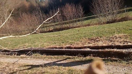 A Woman Walking While Balancing On A Tree Log