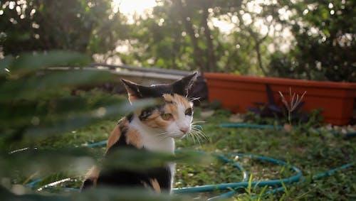 一只猫在植物附近的视频