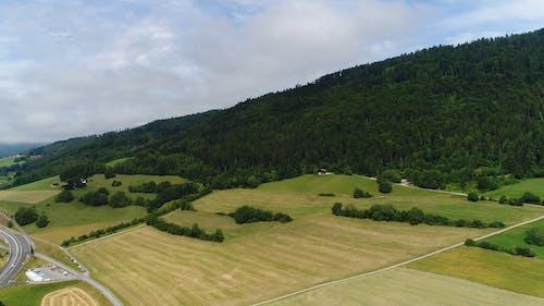 高山森林脚下的草原自然景观