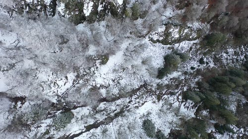 Top View Footage Of The Forest Covered With Snow
