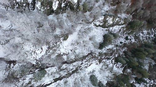 Draufsicht Filmmaterial Des Mit Schnee Bedeckten Waldes