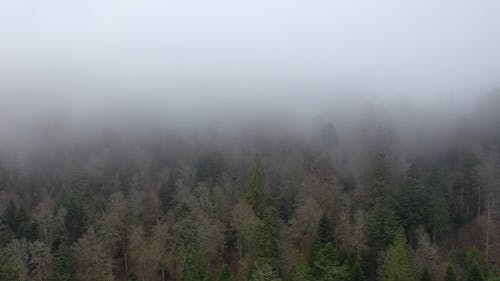 Fog Over The Woods