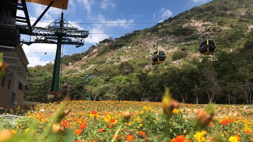 Cable Cars Traveling Above A Field And Flower Garden