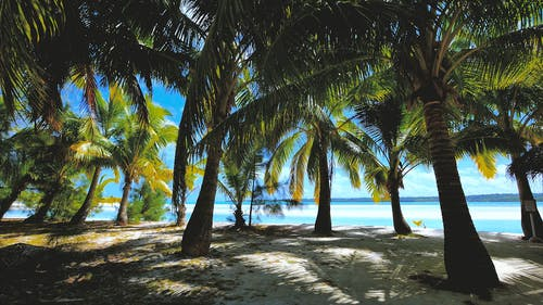 Footage Of The Beach Under The Coconut Tree