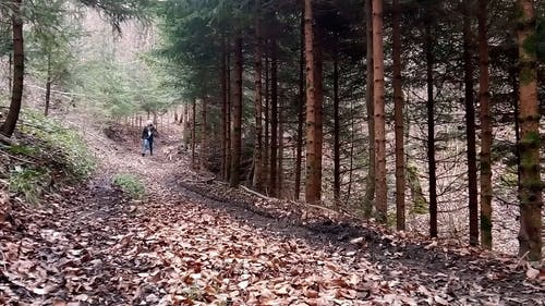 A Woman Strolling With Her Pet Dog In A Hilly Forest Trail
