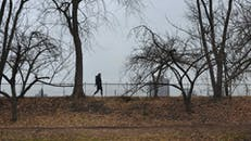 People Walking At The Park
