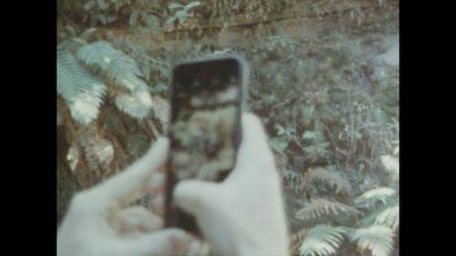 Chụp ảnh Cây Dương Xỉ Bằng Máy ảnh điện Thoại