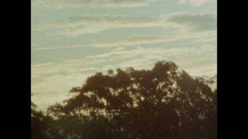 Old Footage Of Trees Dancing With The Wind Blows