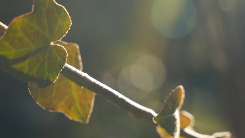 Gros Plan D'une Tige De Plante Avec De Nouvelles Feuilles