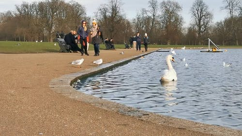 一個有池塘的公園的景色