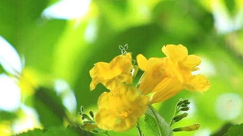 Close-up View Of Yellow Flowers