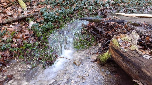 Water Flowing Through Plants And Stones