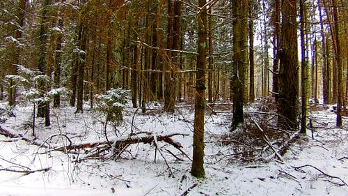 A Forest Ground Covered With Snow And Fallen Tree Branches