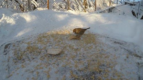 Imágenes De Cerca De Los Pájaros Comiendo En El Suelo