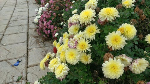 Flower Bearing Plants Planted On Soil Ground